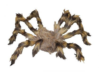 brown hairy spider