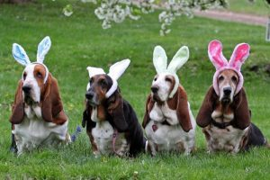 Easter dogs with bunny ears